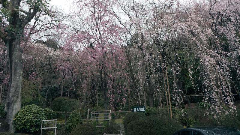 osaka-kyoto-nara-222
