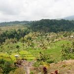 Arrozales en Lombok
