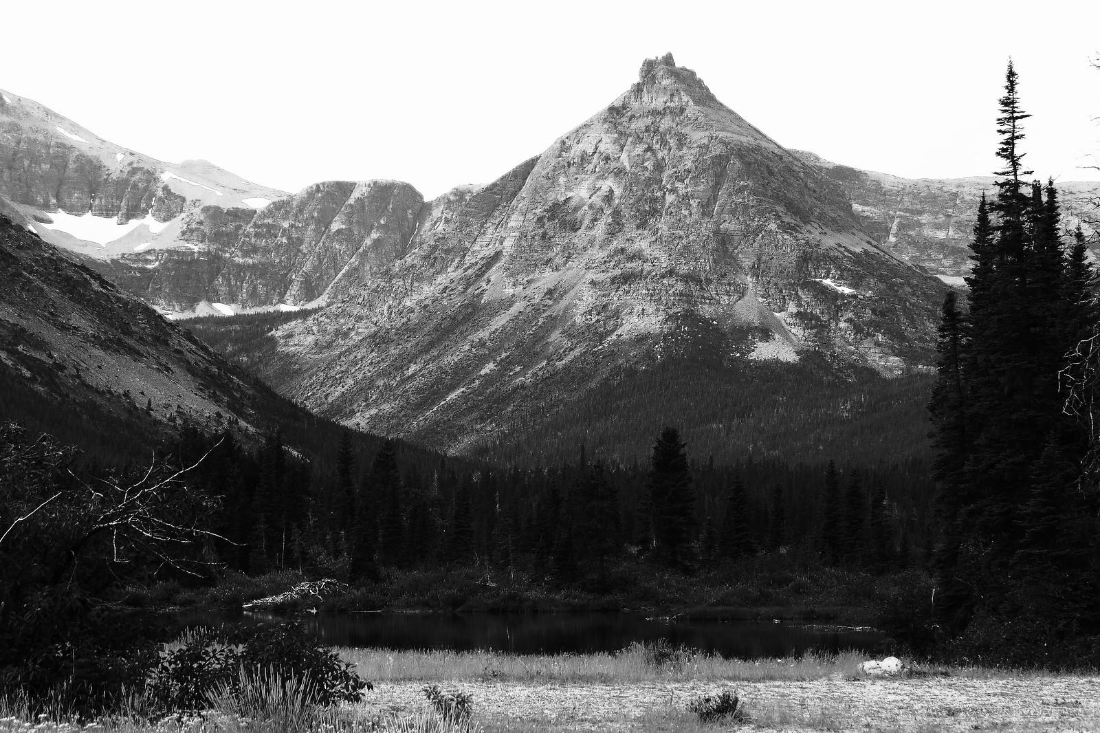 Dry Fork Forest, Blackfeet Glacier, Montana