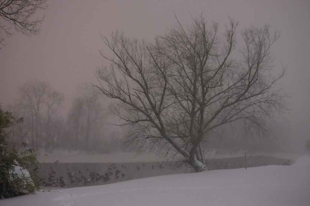 Branch Brook Park, Newark, NJ