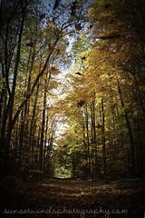 fall (1 of 1)-26