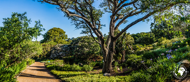 A walk in Kirstenbosch