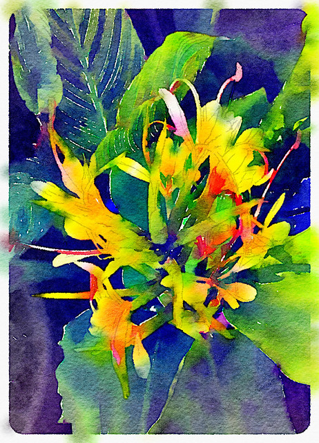 Fragrant Ginger Flower in Waterlogue