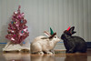 Bunny Holiday Card - Outtake