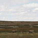 Di, 22.12.15 - 15:25 - Schafe UND Flamingos?!?