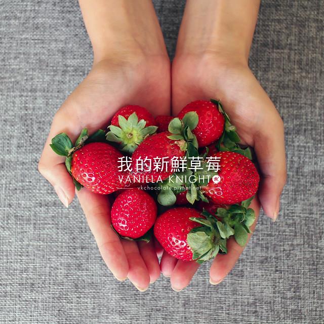 【草莓蛋糕的秘密】小農直送!埔里無毒草莓園的新鮮草莓~@香草騎士