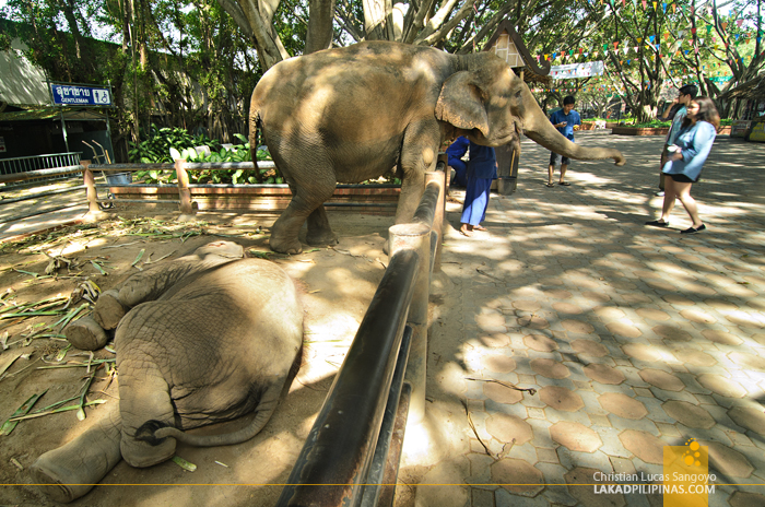 Samphran Elephant Ground & Zoo Elephants