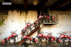 Red Metallic Worker Ants