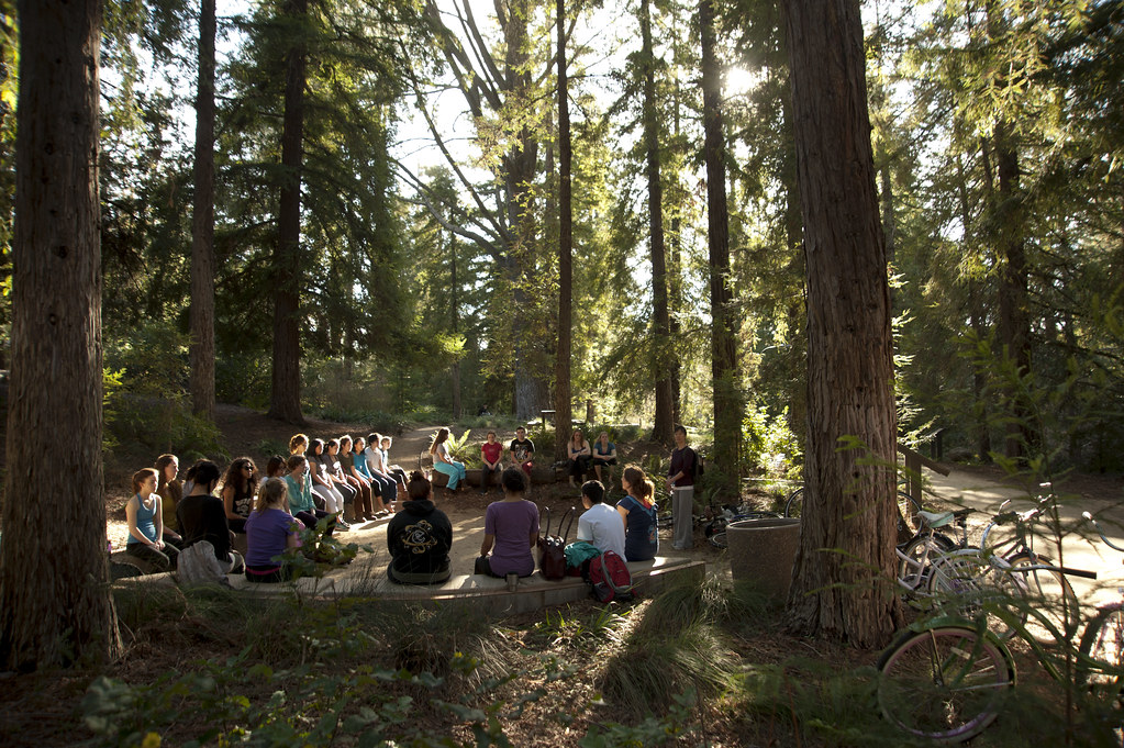Class in Redwood Grove