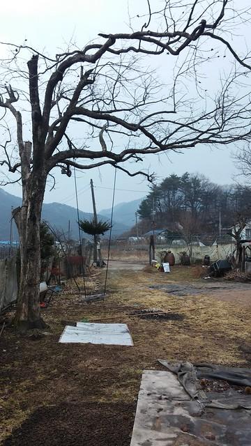 시골집 풍경 : 봄이 왔어요