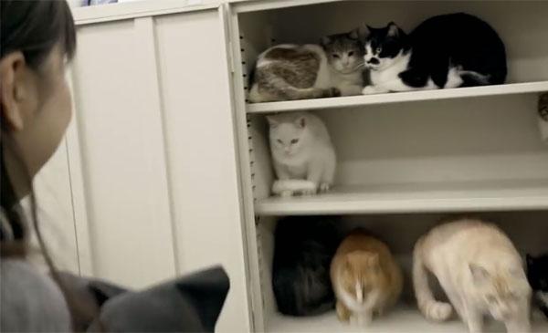 cats-in-office-cupboard-full