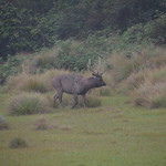 Sri Lanka - Horton plains