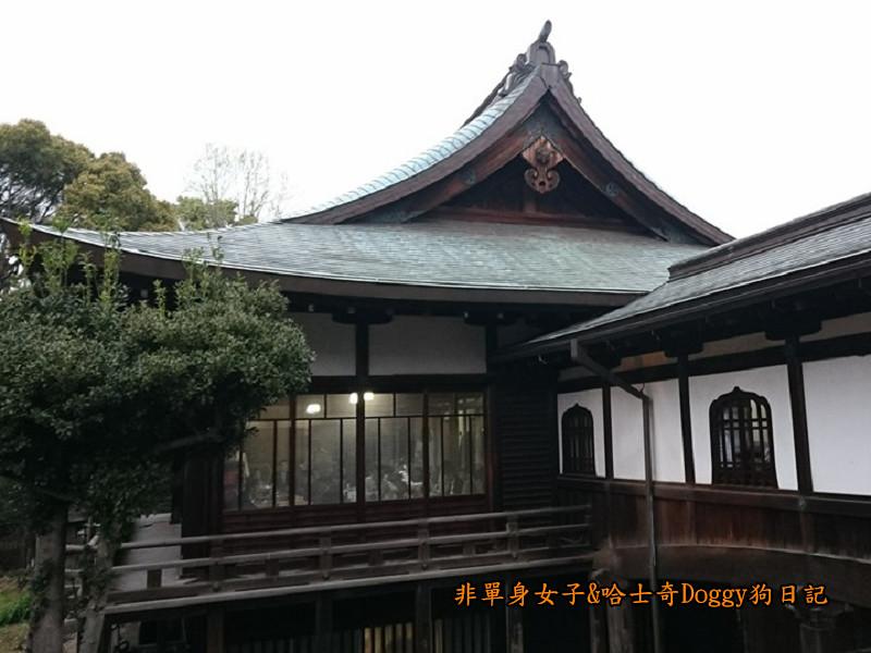 日本東京上野恩賜公園櫻花10