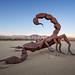 Scorpion by Muzzlehatch