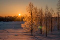 Lapland 2016