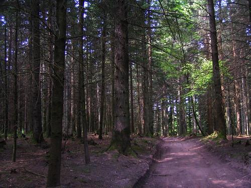 20080511 20495 0901 Jakobus Wald Weg