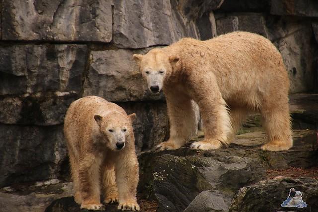 Tierpark Berlin 25.03.2016  0148