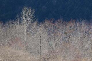 印象的な枯れ木