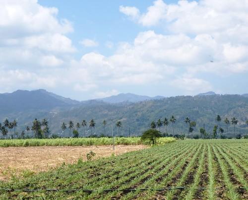 P16-Negros-San Carlos-Dumaguete-Route (41)