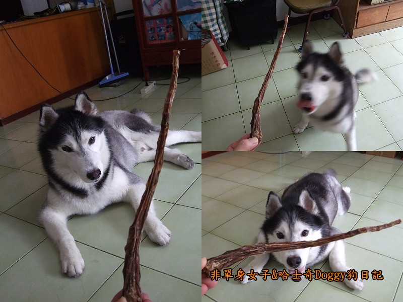 哈士奇Doggy愛狗零食06