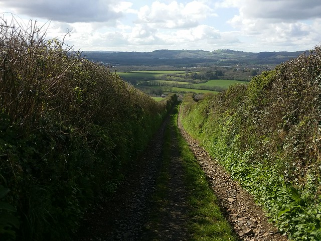 Lane up to Furzeleigh Plantation