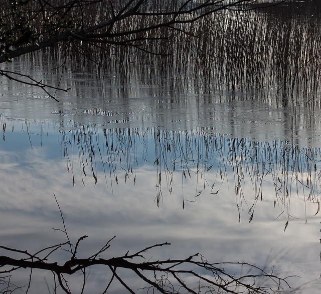 Reeds & ice