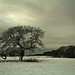 Haighton Snowstorm by Wizard Snaps