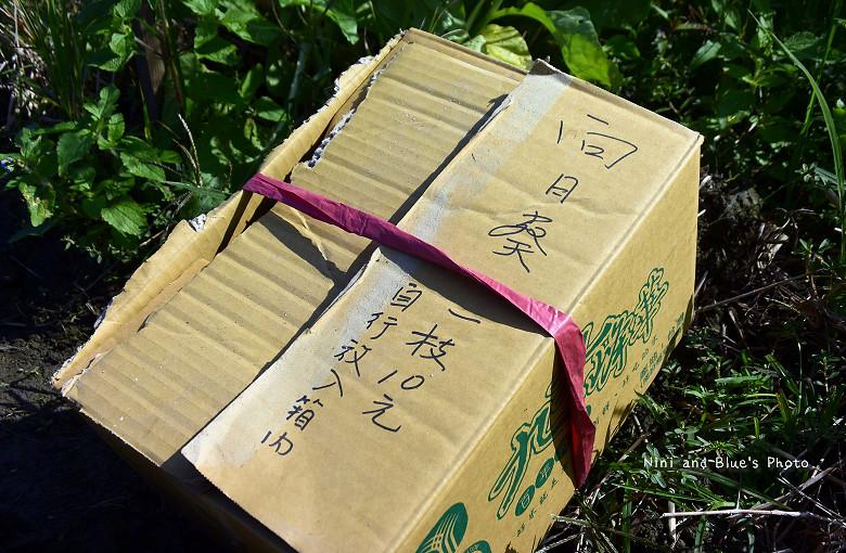 中投草商向日葵花田09