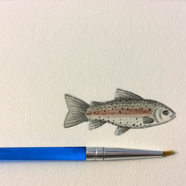 Not a mackerel, but #wip for my #patternjanuary all the same #rainbowtrout #watercolor