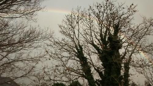 rainbow Jan 16 (4)
