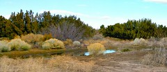Rainwater in the Desert