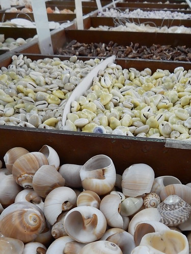 Mazatlan - schelpenmuseum