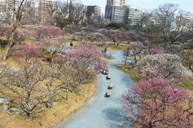 舞鶴公園・梅園