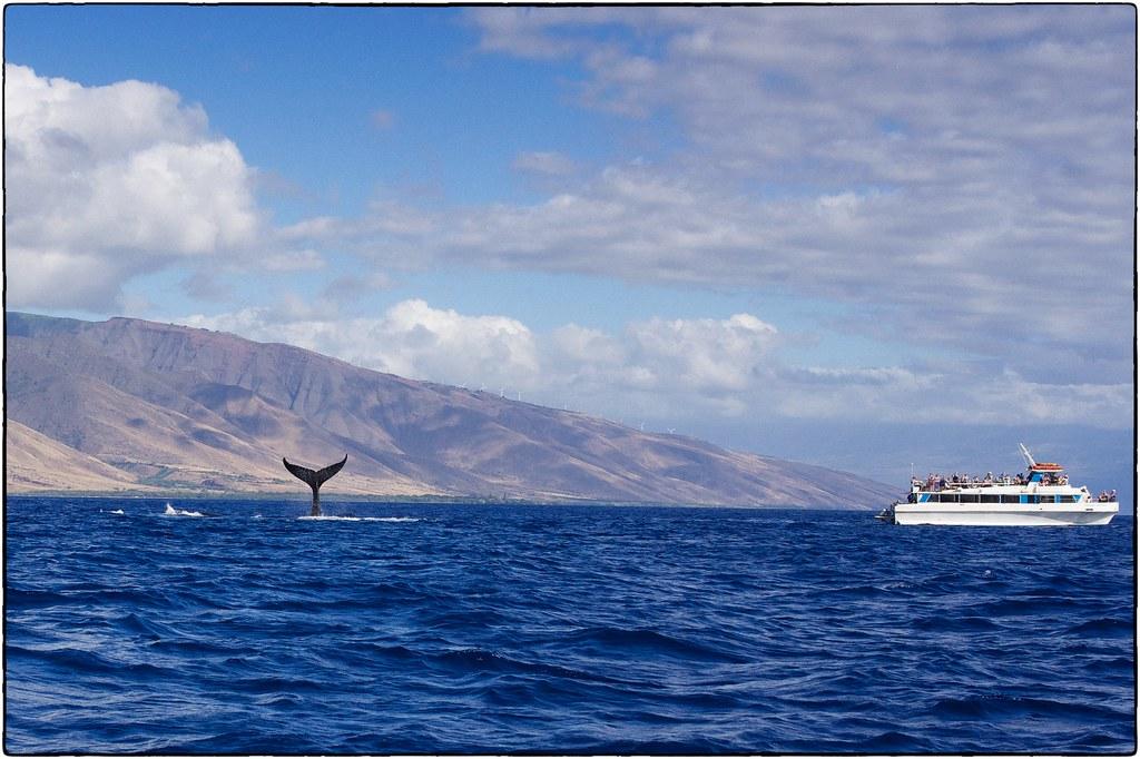 Whale Tail, Maui, February 12, 2016
