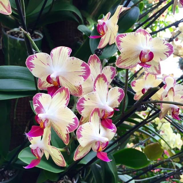 Kew Gardens Orchids 2016