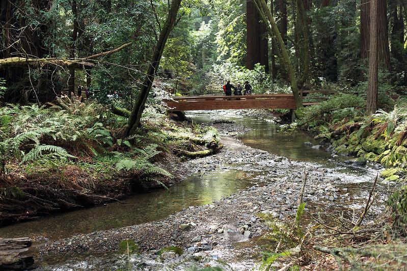 Muir stream