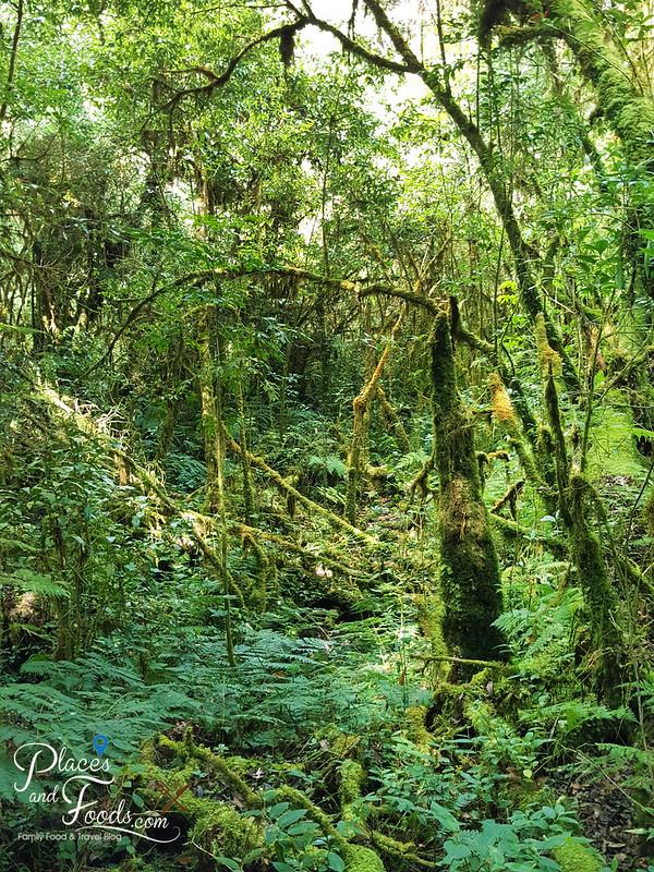 doi inthanon ang ka nature trail jungle