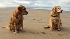 Bruno & Greta