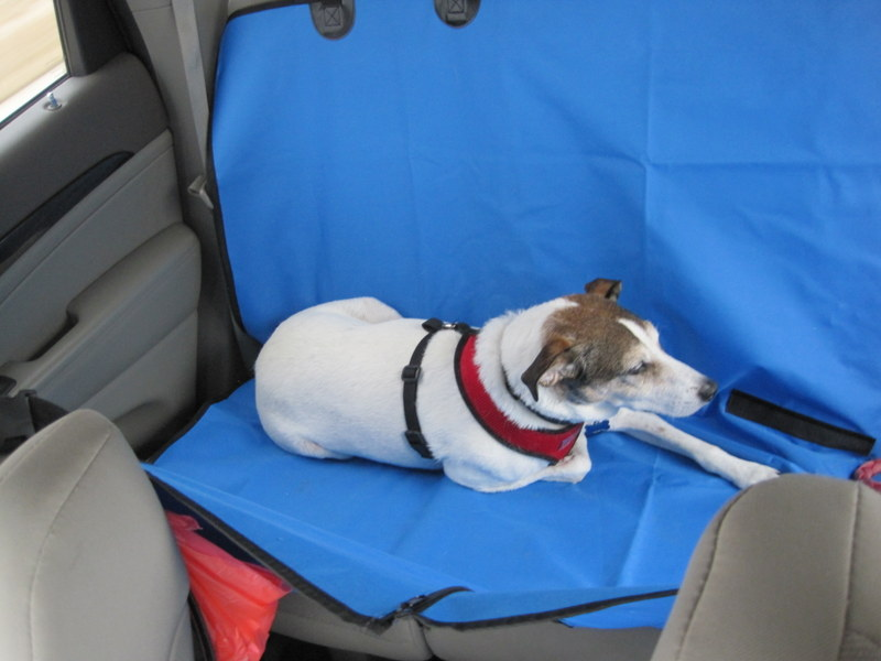 dog seat cover 04