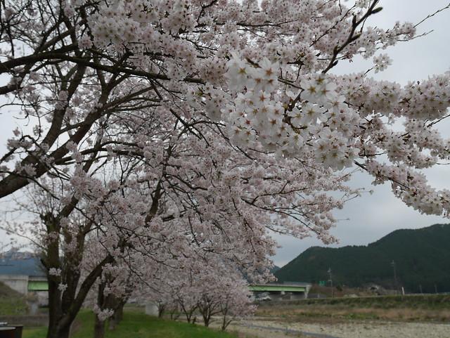 Photo:P1240365 By sukitamba