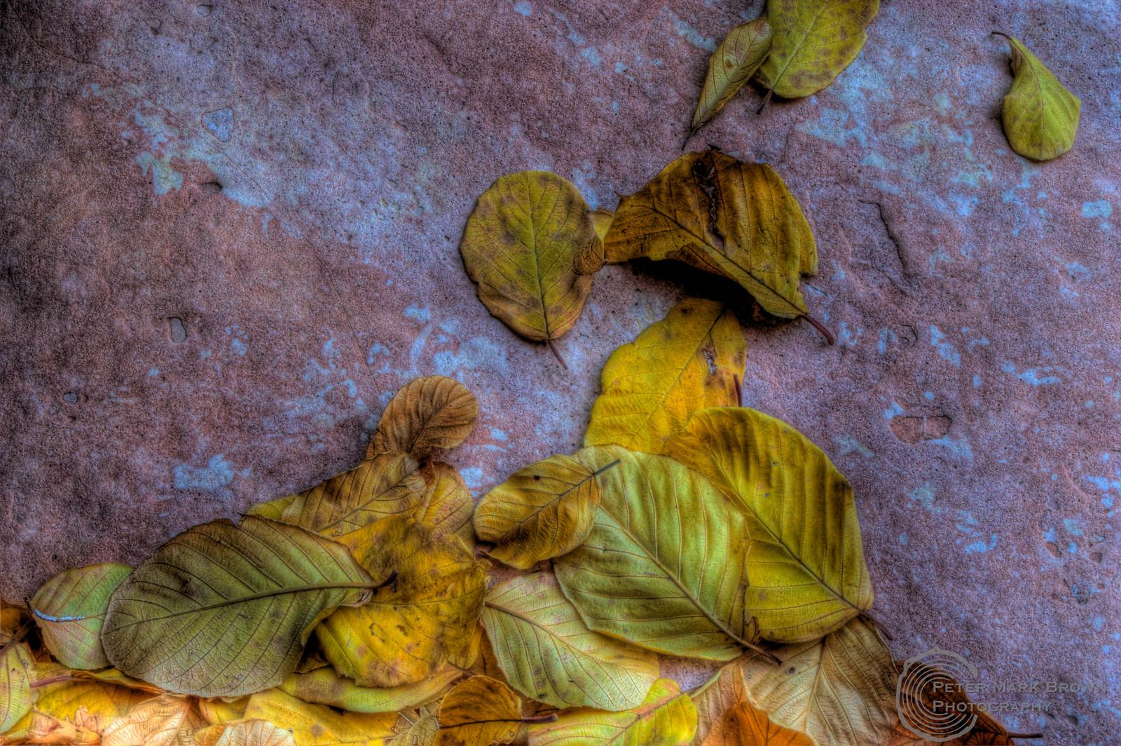 Rock&Leaves1-1.jpg