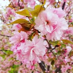 #spring #flower #abqbiopark
