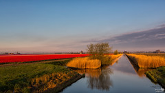 Early in the Morning in the Polder