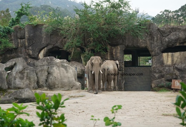 動物園 ぞう