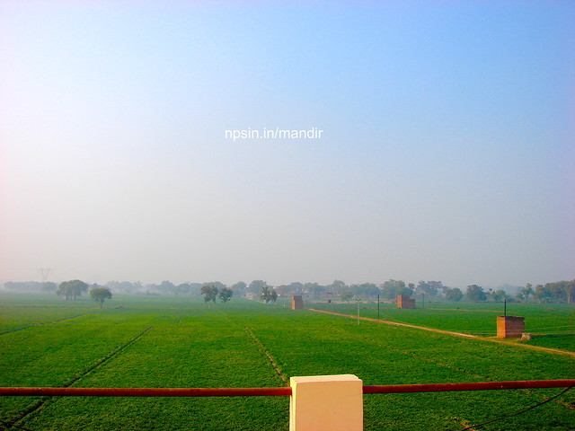 A Beautiful wide green view of potato farming around all four direction of temple premises