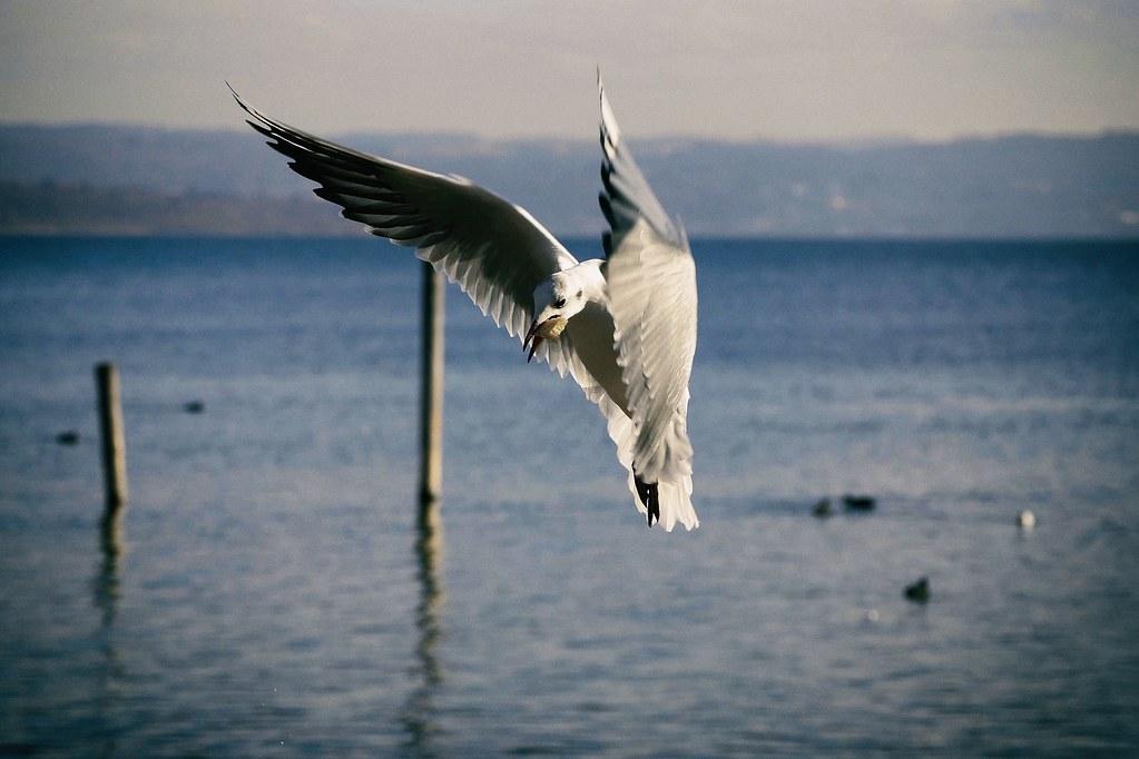 Bread Bird Of Prey