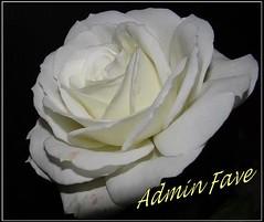 Admin Fave