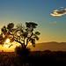 Le soleil, l'arbre et le nuage
