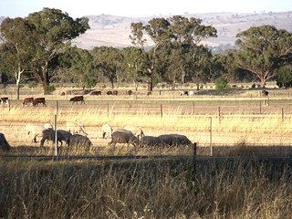 Central NSW - pastoral small farms
