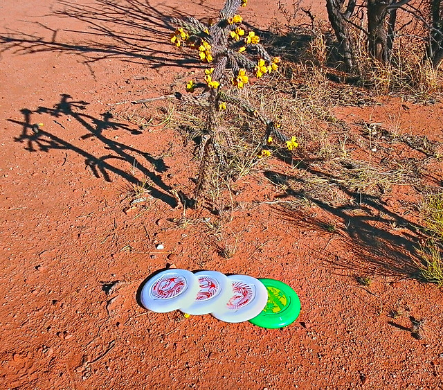 Discs and Cactus